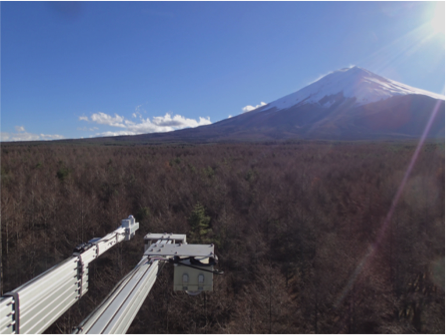 Fuji-Hakone: Spring, forest, cave, and volcanoes around the area - (BOOKING NOW CLOSED)